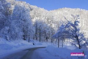 ski_news