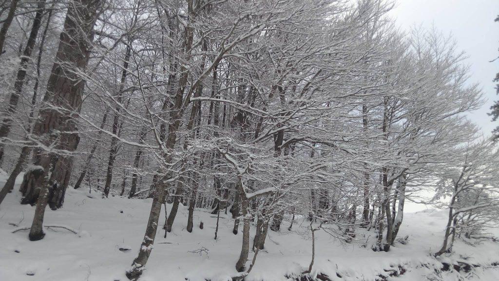 Χιονοδρομικό Κέντρο Βασιλίτας