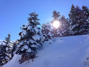 Εθνικός Δρυμός Παρνασσού - Χιονοδρομικό Κέντρο