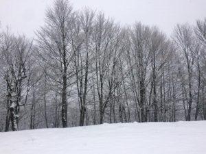 Χιονοδρομικό Κέντρο Βασιλίτσας - 17.12.2017