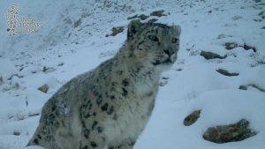 Snow Leopard Day 2018 - Χιονοδρομικό Κένρρο Ζήρειας 10-11 Φεβρουαρίου 2018