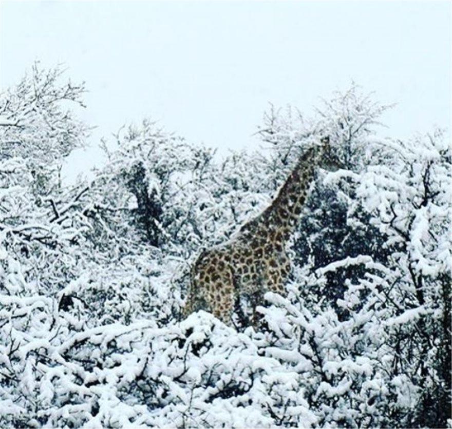 Χιόνια στην Ν. Αφρική